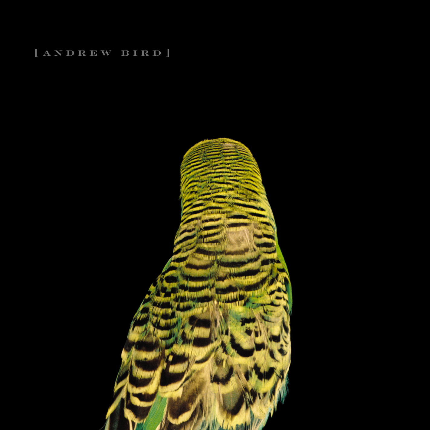 Andrew Bird: Armchair Apocrypha | Mr. Hipster Album ...