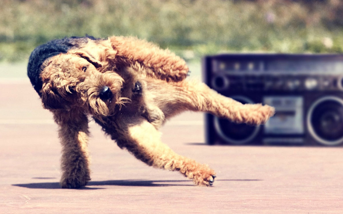 Dog Dancing Feature